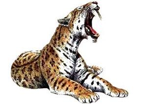 Lynx, Manul, Martelli, chat